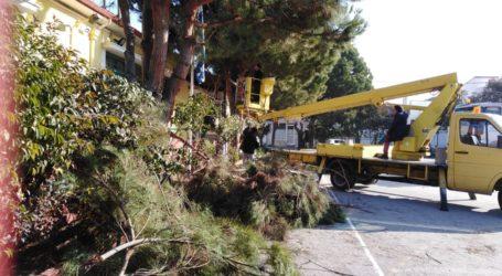 Κλαδεύτηκαν τα δέντρα στο 1ο Δημοτικό σχολείο Αγριάς [εικόνες]