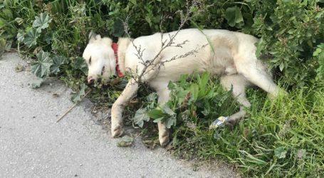 Βόλος: Γέμισαν φόλες τη Νεάπολη – Πάνω από δέκα τα νεκρά σκυλιά [σκληρές εικόνες]