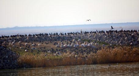 Μεσοχειμωνιάτικες καταμετρήσεις υδρόβιων πουλιών στην Κάρλα [εικόνες]