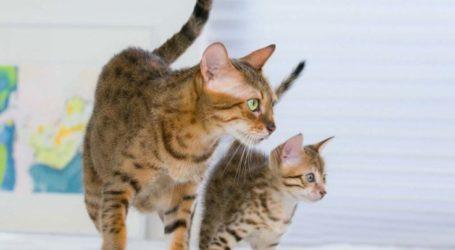 Πρωτοφανές: Πήραν 15 γάτες από Λαρισαία με παρέμβαση εισαγγελέα! – Ζούσαν σε άθλιες συνθήκες