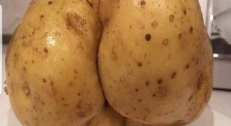 Viral η πατάτα με τα…γλυκά οπίσθια στο Μεσοχώρι