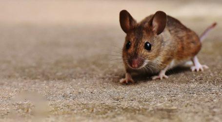 Εικόνες ντροπής – Εξεταστική με… ποντίκια και βρωμιά στο Πανεπιστήμιο του Βόλου