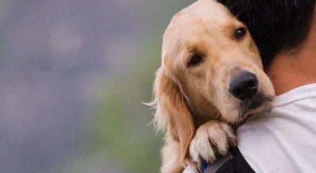 Εννέα αδέσποτα σκυλάκια βρήκαν σπίτι στη σημερινή «Ημέρα Υιοθεσίας» στον Βόλο