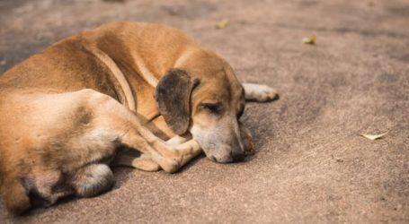 Ηλεκτρονική σελίδα καταγγελιών για την κακοποίηση ζώων ετοιμάζει η Φιλοζωική Λάρισας