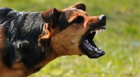 Βόλος: Πέντε επιθέσεις σκύλων σε πολίτες σε τρεις ημέρες – Στο Νοσοκομείο σήμερα μία 45χρονη