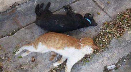 Φρίκη στον Βόλο – Δηλητηριάσαν επτά γάτες