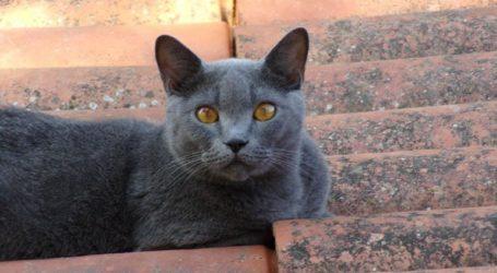 Διαρρήκτες δεν βρήκαν λεφτά και βασάνισαν μέχρι θανάτου τη γάτα του σπιτιού