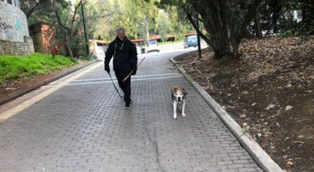 Σκοτώνουν σκυλιά με φόλες στο Αττικό Άλσος