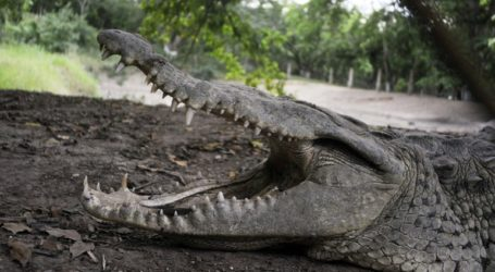 Κροκόδειλος σκότωσε αξιωματούχο του Παγκόσμιου Επισιτιστικού Προγράμματος