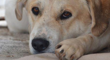 Βάρβαρη μεταχείριση ζώων στα εργαστήρια των Εθνικών Ινστιτούτων Υγείας