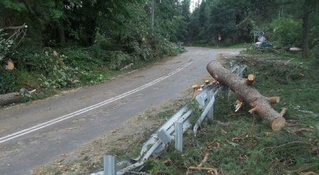 Εκτεταμένες καταστροφές στα δάση της Σλοβενίας από την κακοκαιρία