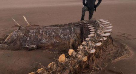 Τεράστιος σκελετός ξεβράστηκε σε παραλία