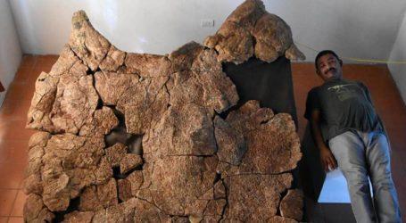 Ανακαλύφθηκαν απολιθώματα γιγάντιας χελώνας, που είχε μέγεθος… αυτοκινήτου
