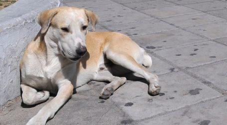 Εγκατέλειψαν στον δρόμο 50 σκυλιά μέσα σε μία εβδομάδα