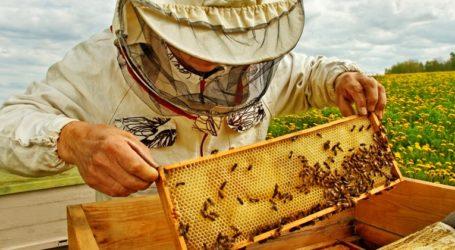 Βόλος: Αλλεργικός προσπάθησε να κλέψει… μελίσσια και το πλήρωσε ακριβά