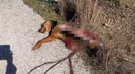 Φρίκη! Κι άλλο κρούσμα άγριας κακοποίησης ζώου στον Βόλο