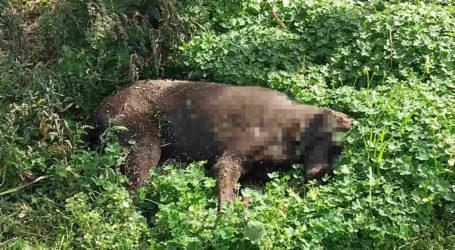 Βόλος: Έριξαν φόλες στο πάρκο του Αγίου Κωνσταντίνου – Ένα ζώο νεκρό [εικόνα]