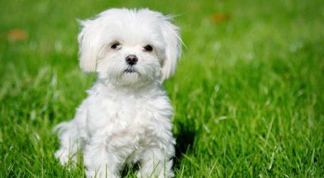 Βόλος: Έδωσε λεφτά για την αγορά σκύλου, αλλά δεν το είδε ποτέ!