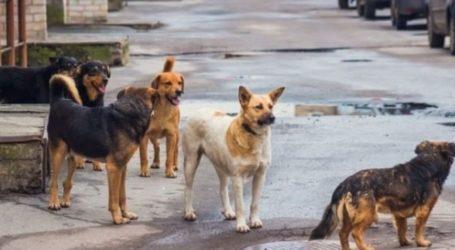 Αγέλη αδέσποτων σκύλων επιτέθηκε σε 66χρονο Βολιώτη