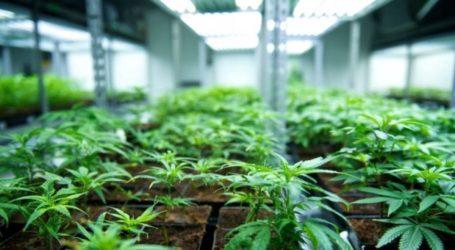 «Πράσινο φως» για μονάδα φαρμακευτικής κάνναβης στον Αλμυρό