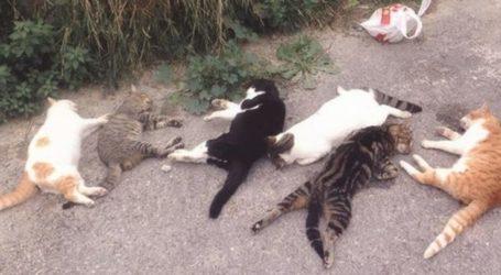 Συναγερμός στις τάξεις των Λαρισαίων φιλόζωων – Εννέα γατάκια νεκρά από φόλες στη Λάρισα