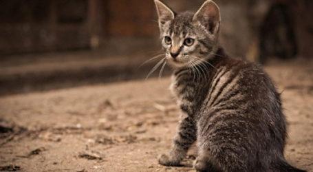 Φρίκη στον Βόλο – Σκότωσαν με φόλες πέντε γάτες