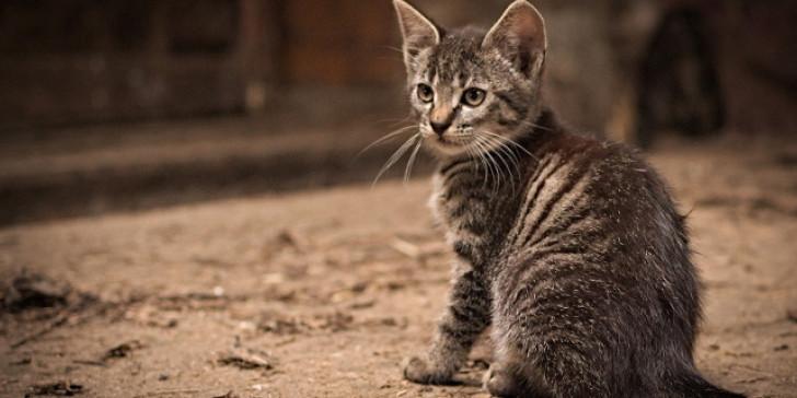 kitty 708 2