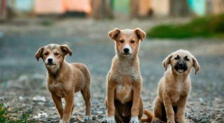Τι ανακοινώνει ο Κτηνιατρικός Σύλλογος Λάρισας για τον κοροναϊό