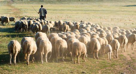 Σε απόγνωση οι κτηνοτρόφοι της Μαγνησίας λόγω κορωνοϊού – Ο φόβος της ασθ'ενειας