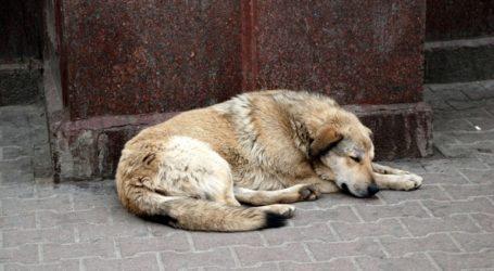 Πρωτοβουλία του Δήμου Κορυδαλλού για τα αδέσποτα ζώα