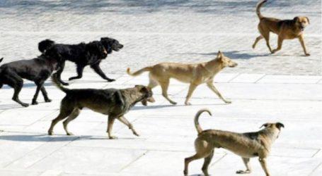 Σύσκεψη για τα αδέσποτα ζώα στο δημαρχείο του Βόλου – Τι αποφασίστηκε