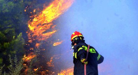 Συναγερμός στην Πυροσβεστική του Βόλου – Τέσσερα μέτωπα φωτιάς σε λίγες ώρες