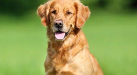 Βόλος: Πυροβολούσε σε αυλή δεσποζόμενα σκυλιά και καταδικάστηκε σε φυλάκιση