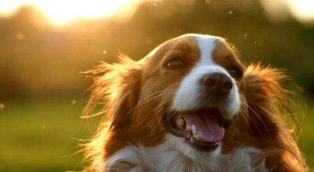 Ημέρα υιοθεσίας αδέσποτων σκύλων στον Βόλο