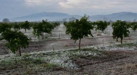 Δήμος Τυρνάβου: Υποβολή προσωρινής δήλωσης ζημιάς ΕΛΓΑ για τις καταστροφές από τον πρόσφατο παγετό