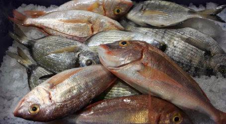 Νέα απάτη στον Βόλο: Πουλάνε ψάρια δήθεν για καλό σκοπό
