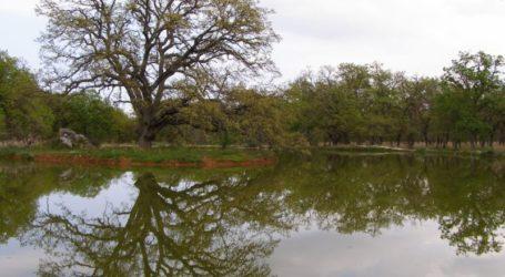 Αλμυρός: Λουκέτο στο Δάσος Κουρί λόγω κορωνοϊού