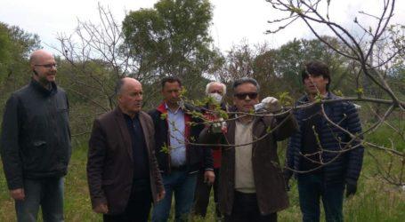Βιολογικό πρόγραμμα από την Περιφέρεια Θεσσαλίας για τη στήριξη των καστανοπαραγωγών
