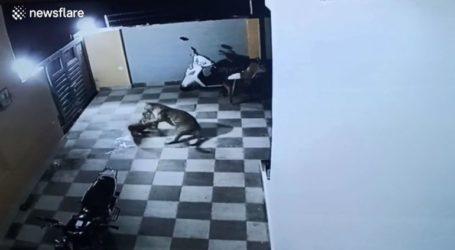 Σκύλος δίνει μάχη με λεοπάρδαλη και καταφέρνει να τη… γλυτώσει