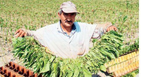 Οι προτάσεις του Συμβουλίου Υπουργών για τα μέτρα στήριξης στην αγροτική οικονομία