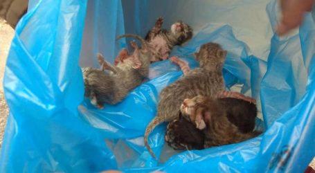 Βόλος: Πέταξαν πέντε νεογέννητα γατάκια σε κάδο απορριμμάτων [εικόνες]