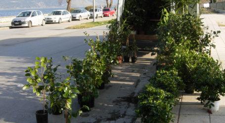 Βόλος: Βαριά «καμπάνα» σε 53χρονο που πουλούσε κηπευτικά στην Αγριά