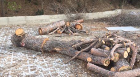 Μήνυση του δημάρχου Σκιάθου εναντίον δύο εταιρειών για εργασίες υλοτομίας