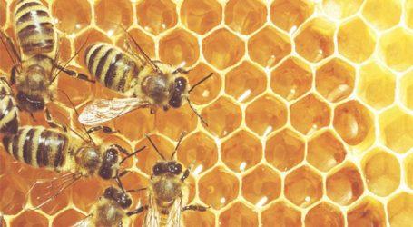 Μαγνησία: Δράσεις βελτίωσης της μελισσοκομίας με τη χορήγηση οικονομικών ενισχύσεων προμήθειας εξοπλισμού κυψελών