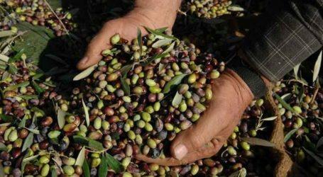Συγκροτήθηκε ομάδα εργασίας για αποζημιώσεις ελαιοκαλλιεργητών στη Μαγνησία