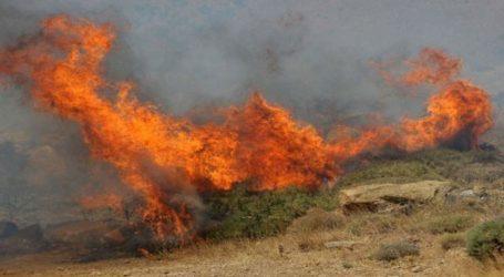 Φωτιά σε δασική έκταση στη Ζαγορά Πηλίου