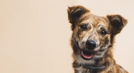 Βολιώτες απολυμαίνουν τα κατοικίδιά τους με χλωρίνη – Τι συμβουλεύουν οι κτηνίατροι