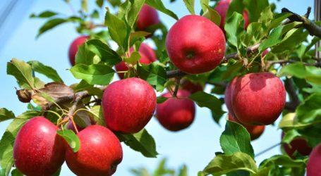 Κ. Μαραβέγιας: Τη ΜεγάληΤετάρτη οι αποζημιώσειςστους μηλοπαραγωγούς του Δήμου Ζαγοράς-Μουρεσίου