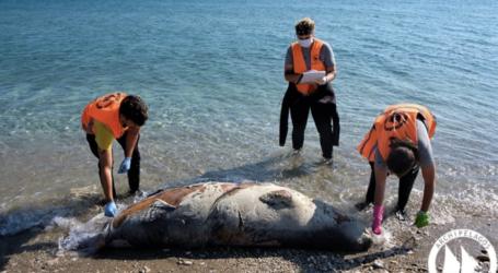 Νεκρή φώκια στη Σκιάθο – Άλλες έξι σε όλο το Αιγαίο