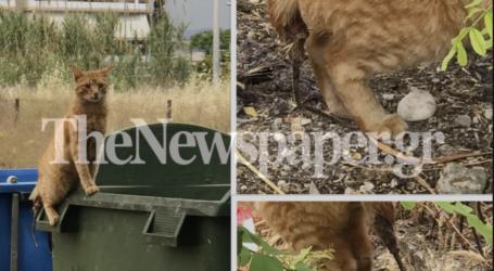 Βόλος: Βασάνισαν γάτα και της έκοψαν την ουρά [σκληρές εικόνες]